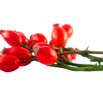 Herb-Hedgerow-Rosehips
